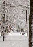 Χειμερινή ομορφιά έννοιας hardwood Τα γυμνά δέντρα που καλύπτονται με με το χιόνι στοκ εικόνες με δικαίωμα ελεύθερης χρήσης