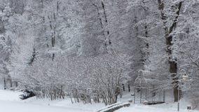 Χειμερινή ομορφιά έννοιας hardwood Τα γυμνά δέντρα που καλύπτονται με με το χιόνι στοκ φωτογραφίες με δικαίωμα ελεύθερης χρήσης