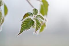Χειμερινή ομορφιά Στοκ εικόνα με δικαίωμα ελεύθερης χρήσης