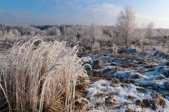 Χειμερινή ομορφιά Στοκ φωτογραφία με δικαίωμα ελεύθερης χρήσης