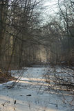 Χειμερινή παράδοση Στοκ εικόνα με δικαίωμα ελεύθερης χρήσης