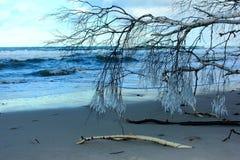 Χειμερινή παραλία μετά από τη θύελλα με τους παγωμένους κλάδους Στοκ εικόνες με δικαίωμα ελεύθερης χρήσης