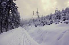 Χειμερινή πορεία Στοκ Εικόνες