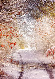 Χειμερινή πορεία Στοκ Εικόνα