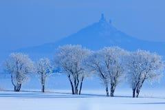 Χειμερινή σκηνή με το χιόνι και τα δέντρα Γοτθικό κάστρο Hazmburk στο δύσκολο βουνό, τοπίο λόφων σε Ceske Stredohori, Τσεχία Κοβά Στοκ Εικόνες