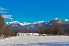 Χειμερινή σκηνή στο έλος με το χιόνι Στοκ Εικόνες