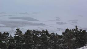 Χειμερινή σκηνή στο εθνικό πάρκο cairngorm κατά τη διάρκεια μιας κρύας ημέρας το χειμώνα, Σκωτία, ηλιόλουστη φιλμ μικρού μήκους