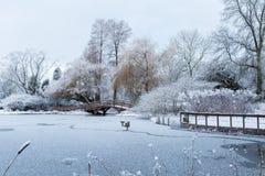 Χειμερινή σκηνή στο δημοτικό κήπο με το πρόσφατα πεσμένο χιόνι σε μια παγωμένη λίμνη Στοκ Φωτογραφίες