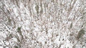 Χειμερινή σκηνή της Νίκαιας στα βουνά πλάνο Τοπ άποψη του χιονώδους τοπίου βουνών στο δάσος στοκ φωτογραφίες με δικαίωμα ελεύθερης χρήσης