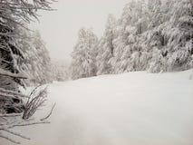 Χειμερινή σκηνή του ομαλού χιονιού, και χιονισμένη ελαφριάς ομίχλη δέντρων και στοκ φωτογραφία με δικαίωμα ελεύθερης χρήσης
