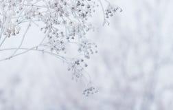 Χειμερινή σκηνή Στοκ εικόνες με δικαίωμα ελεύθερης χρήσης