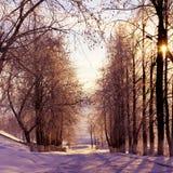 Χειμερινή φύση, ηλιοβασίλεμα Στοκ Εικόνες