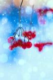 Χειμερινή φύση τέχνης Στοκ Εικόνα