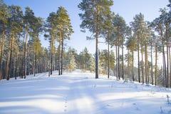Χειμερινή φύση της Σιβηρίας Στοκ Φωτογραφία