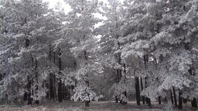 Χειμερινή χώρα των θαυμάτων στοκ φωτογραφία με δικαίωμα ελεύθερης χρήσης