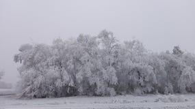 Χειμερινή χώρα των θαυμάτων 13 Στοκ Εικόνες