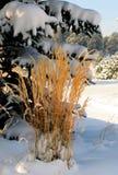 Χειμερινή χλόη Στοκ Εικόνα