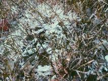 Χειμερινή χλόη Στοκ Εικόνες