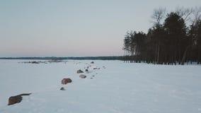 Χειμερινή forestAerial άποψη περιπάτων σκυλιών της παγωμένης λίμνης που περιβάλλεται το μεγάλο δάσος πεύκων που καλύπτεται από με απόθεμα βίντεο