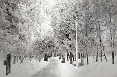 Χειμερινή ` s πορεία Στοκ Φωτογραφίες