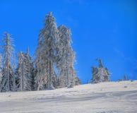 Χειμερινοί δάσος και μπλε ουρανός Στοκ φωτογραφία με δικαίωμα ελεύθερης χρήσης