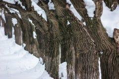 Χειμερινοί παγετός και χιόνι Στοκ εικόνα με δικαίωμα ελεύθερης χρήσης