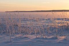Χειμερινός κάλαμος Στοκ Φωτογραφίες