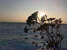 Χειμερινός κλάδος ηλιοβασιλέματος Στοκ φωτογραφία με δικαίωμα ελεύθερης χρήσης