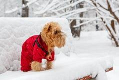 Χειμερινός περίπατος στο πάρκο στοκ εικόνες