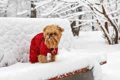 Χειμερινός περίπατος στο πάρκο στοκ φωτογραφία