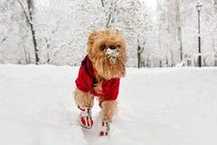 Χειμερινός περίπατος στο πάρκο στοκ φωτογραφία με δικαίωμα ελεύθερης χρήσης