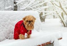 Χειμερινός περίπατος στο πάρκο στοκ φωτογραφίες με δικαίωμα ελεύθερης χρήσης