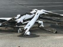 Χειμερινός φράκτης Στοκ Εικόνα
