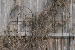 Χειμερινός φράκτης Στοκ Εικόνες