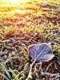 Χειμερινός hoar παγετός Στοκ Εικόνα