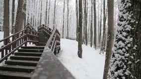 Χειμερινό δάσος, αναμμένο από τον ήλιο, σκαλοπάτια στο δάσος απόθεμα βίντεο