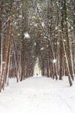 Χειμερινό δάσος, αλέα που καλύπτεται από το χιόνι κατά τη διάρκεια της χιονοθύελλας Στοκ Εικόνες