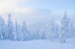 Χειμερινό δάσος κάτω από το χιόνι Στοκ Εικόνα