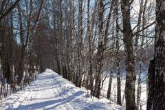 Χειμερινό δάσος κάτω από το χιόνι Στοκ Φωτογραφία
