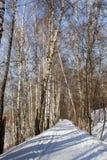 Χειμερινό δάσος κάτω από το χιόνι Στοκ εικόνα με δικαίωμα ελεύθερης χρήσης