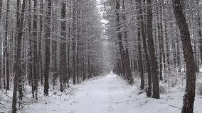 Χειμερινό δάσος κατά τη διάρκεια χιονοπτώσεων απόθεμα βίντεο