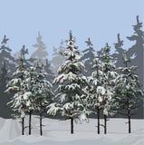 Χειμερινό δάσος με τα δέντρα έλατου Στοκ εικόνα με δικαίωμα ελεύθερης χρήσης