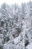 Χειμερινό δάσος με τα χιονισμένα δέντρα και τις χιονοπτώσεις Στοκ Εικόνες