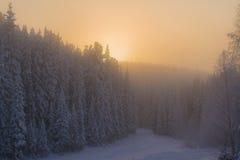 Χειμερινό δάσος που καλύπτεται με το χιόνι στην παγωμένη ελαφριά ομίχλη Στοκ Φωτογραφίες