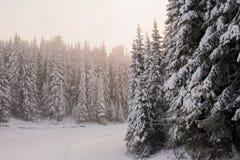 Χειμερινό δάσος που καλύπτεται με το χιόνι στην παγωμένη ελαφριά ομίχλη Στοκ Εικόνες