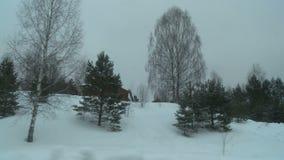 Χειμερινό δάσος σε μια δυσάρεστη κρύα άποψη ημέρας απόθεμα βίντεο
