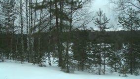 Χειμερινό δάσος σε μια δυσάρεστη κρύα άποψη ημέρας φιλμ μικρού μήκους