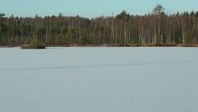 Χειμερινό δάσος στην παγωμένη λίμνη Καθαρή και παγωμένη ημέρα Ομαλός μετακινηθείτε τον πυροβολισμό απόθεμα βίντεο