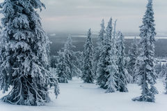 Χειμερινό δάσος στη βόρεια Φινλανδία στοκ εικόνες με δικαίωμα ελεύθερης χρήσης