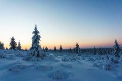 Χειμερινό δάσος στη βόρεια Φινλανδία Στοκ Εικόνα